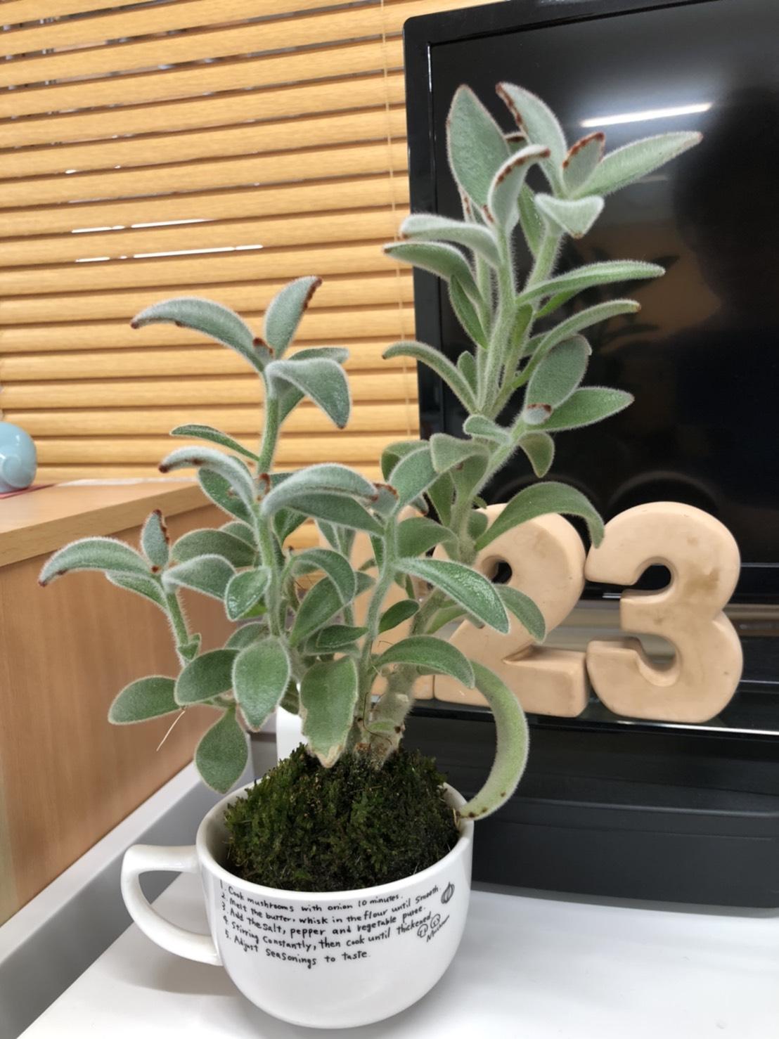 記事 癒しの植物のアイキャッチ画像